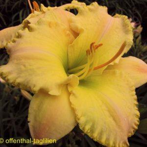 'Fragrant Bouquet'